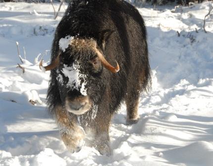 Naessa - det yngsta djuret i hägnet