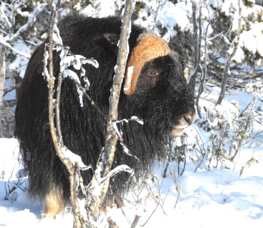 Ulrik - trivs i snön